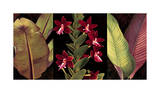 Red Orchids and Palm Leaves Giclee Print by Rodolfo Jimenez