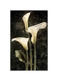 Callas II Giclee Print by John Seba