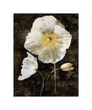 Poppies II Giclee Print by John Seba