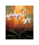 Orchids Giclee Print by Jill Deveraux