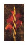 Gladiola Giclee Print by John Seba