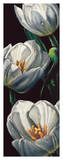 Dewdrop Tulips Giclee Print by  Alma'ch