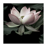 The Lotus I Giclee Print by Andy Neuwirth