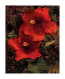 Hibiscus II Giclee Print by John Seba