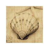 Scallop Giclee Print by John Seba