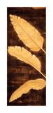 Tropical Palm Triptych I Giclee Print by David Parks