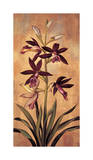 Burgundy Orchid Giclee Print by Jill Deveraux