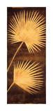 Fan Palm Triptych III Giclee Print by David Parks