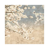 Cherry Blossoms II Giclee Print by John Seba
