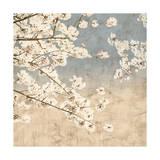 John Seba - Cherry Blossoms II - Giclee Baskı