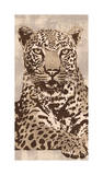 Leopard Giclee Print by Andrew Cooper
