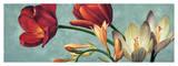 Luce e Colore I Giclee Print by Eva Barberini