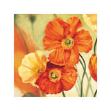 Champs de Coquelicots I Giclee Print by Pierre Viollet