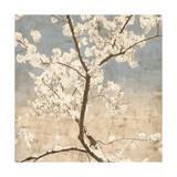 Cherry Blossoms I Giclee Print by John Seba
