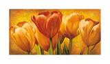 Bouquet of Orange Tulips Giclee Print by David Pedersen