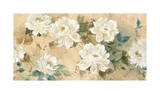 White Petals Giclee Print by Jil Wilcox