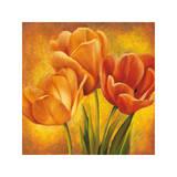 Orange Tulips II Giclee Print by David Pedersen