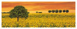 Field of Sunflowers Giclee Print by Richard Leblanc
