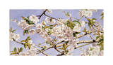 Apple Blossoms Giclee Print by John William Hill