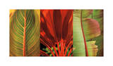 Tropical Treasure I Giclee Print by John Seba