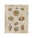 Shell Collection II Giclee Print by Deborah Devellier