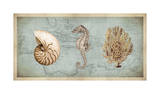 Sea Treasures I Giclee Print by Deborah Devellier