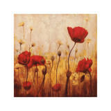 Poppies and Daisies II Giclee Print by Natalie Carter