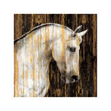 Horse II Giclee Print by Martin Rose