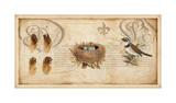 Nesting I Giclee Print by Deborah Devellier