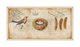 Nesting II Giclee Print by Deborah Devellier