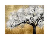 Silver Blossoms Reproduction procédé giclée par Kate Bennett