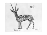 8E Slender-Horned Gazelle, 2009 Giclee Print by Xavier Cortada