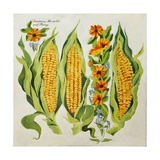 Corn and Marrow Flowers, 2014 Giclee Print by Jennifer Abbott