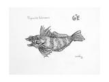 6E Skulpin, 2009 Giclee Print by Xavier Cortada