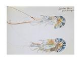 Gambas Bleus, 2002 Giclee Print by Simon Fletcher