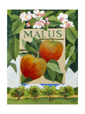 Malus (Apple), 2014 Giclee Print by Jennifer Abbott