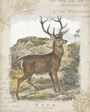 Woodland Stag I Print by Hugo Wild