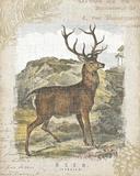 Woodland Stag I Print