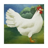 Cockerel, 2013 Giclee Print by Jennifer Abbott
