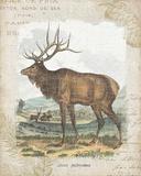 Woodland Stag II Reprodukcje autor Hugo Wild