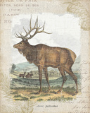Woodland Stag II Prints