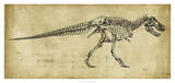Tyrannosaurus Rex Study Giclee Print by Ethan Harper