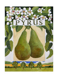 Pyrus (Pear), 2014 Giclee Print by Jennifer Abbott