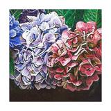 Hydrangeas, 2010 Giclee Print by Helen White