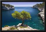 Lone Pine Tree Growing Out of Solid Rock, Calanques Near Cassis, Provence, France Framed Photographic Print by Brian Jannsen