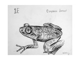 1E Togo Slippery Frog, 2009 Giclee Print by Xavier Cortada