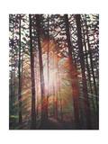 Sunburst, 2010 Giclee Print by Helen White