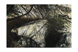 Undergrowth, 2010 Giclee Print by Calum McClure