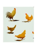 Cock and Three Hens 2013 Giclee Print by Simon Fletcher