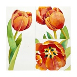 Three Tulip Studies in a Sure, 2013 Giclee Print by Jennifer Abbott